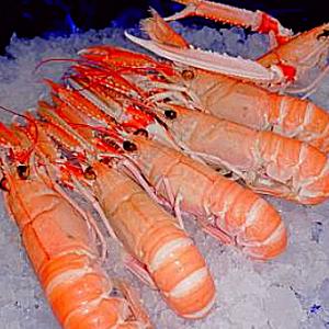 les meilleurs fruits de mer