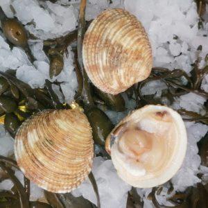 coquillages juan-les-pins