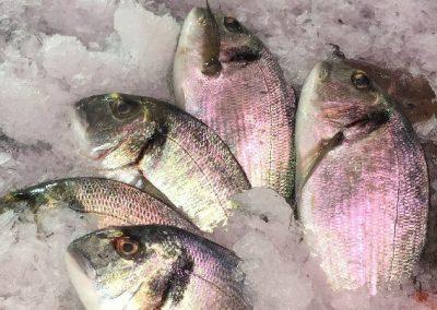 poisson juan-les-pins