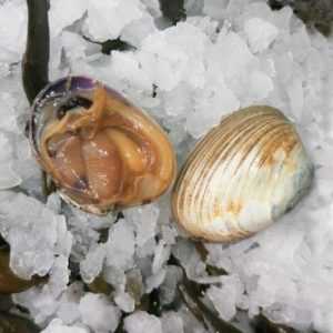 composer un plateau de fruits de mer