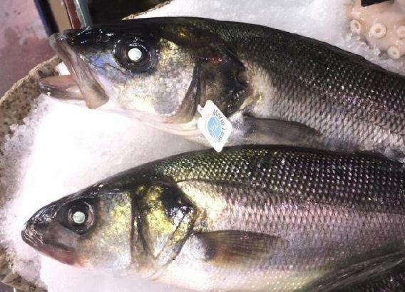 fish antibes